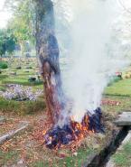 Tatkala Jakarta Menyiksa Pohon
